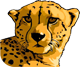 Rush logo: cheetah head